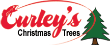 christmas tree for sale in bolton horwich westhoughton